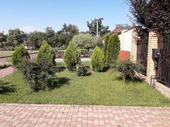 Lawn, seeding lawn in Odessa